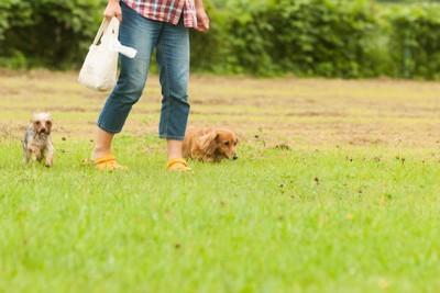 並んで歩く、ダックスとヨーキーと飼い主さん