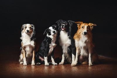 夜に起きている犬たち