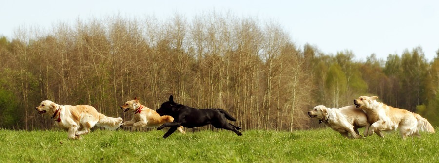 追いかけっこをする犬達