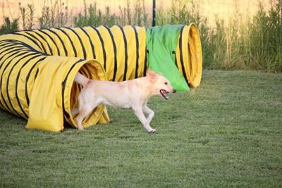 筒から出る犬