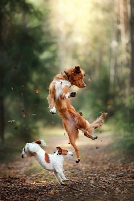 大きく飛び跳ねる2頭の犬