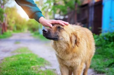 眉間を撫でてもらっている犬