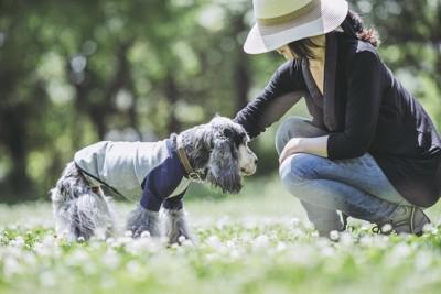 服を着たスパニエルの老犬と女性