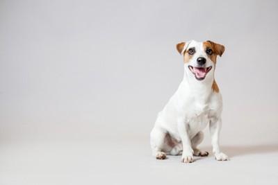 笑って座っている犬