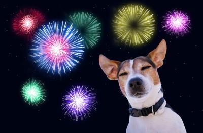 花火の音に耳を澄ませて目を閉じる犬