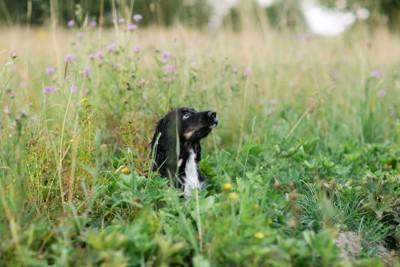 草むらに犬