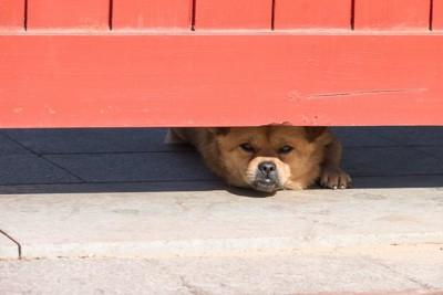 扉の隙間からこちらを見ている犬