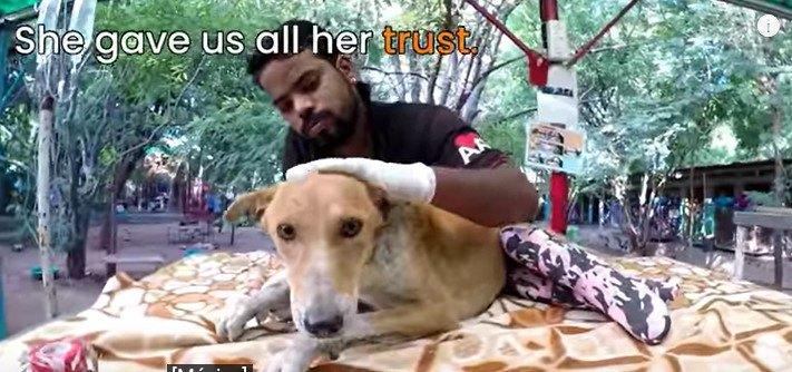 診断を受ける犬
