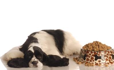 ドッグフードと食欲のない犬