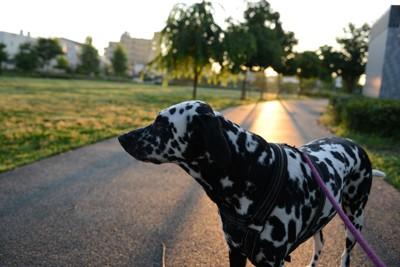 散歩に走り出す犬と飼い主の後ろ姿