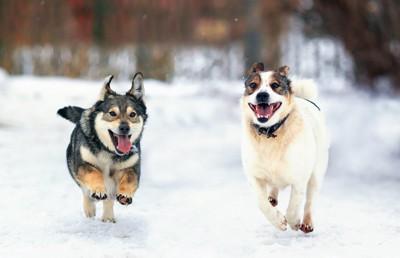 雪で遊ぶ犬と女性