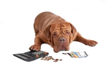 うなだれた犬と電卓とお金