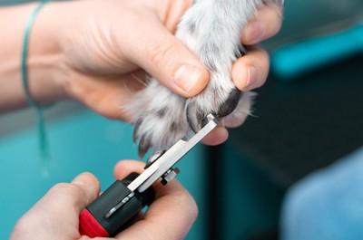 爪を切られる犬