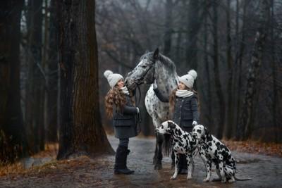 馬と少女とダルメシアン