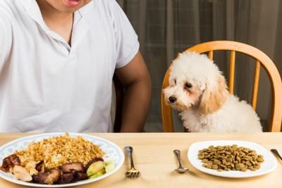 人間の食事を狙う犬