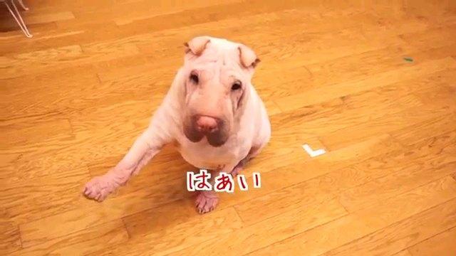 はぁい~字幕