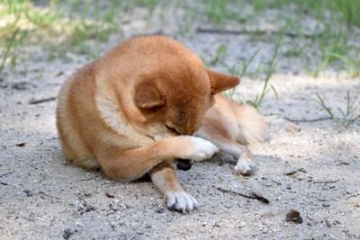 痒そうに自分の目を掻いている犬
