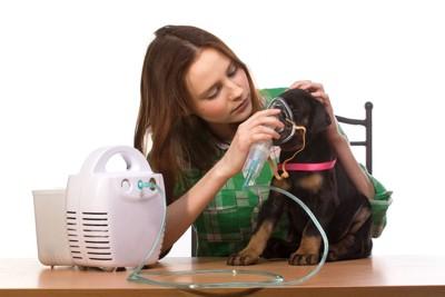 呼吸器をつける犬