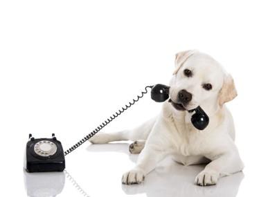 黒電話の受話器をくわえる犬