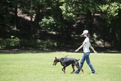 芝生をお散歩する女性とドーベルマン
