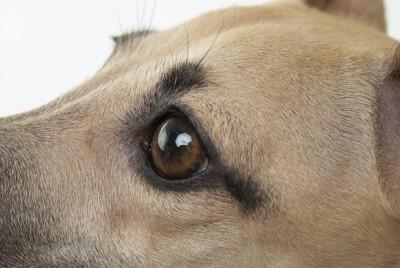 横を向いた犬の目アップ