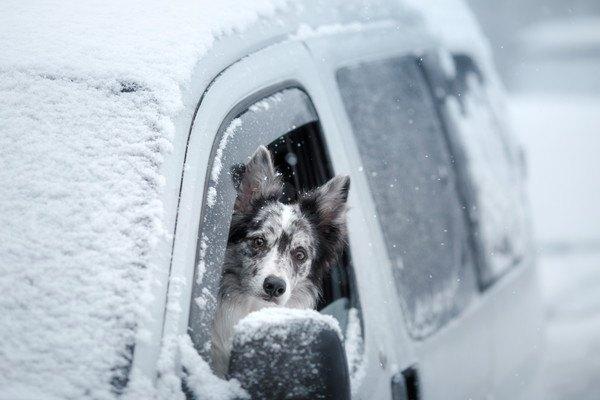 雪が積もった車の窓から顔を出す犬