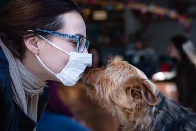 マスクを着けた女性に顔を近づけるテリア