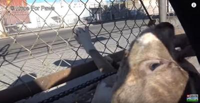 金網に前足をかける犬