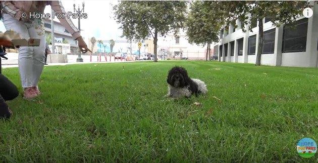 芝生に伏せる犬