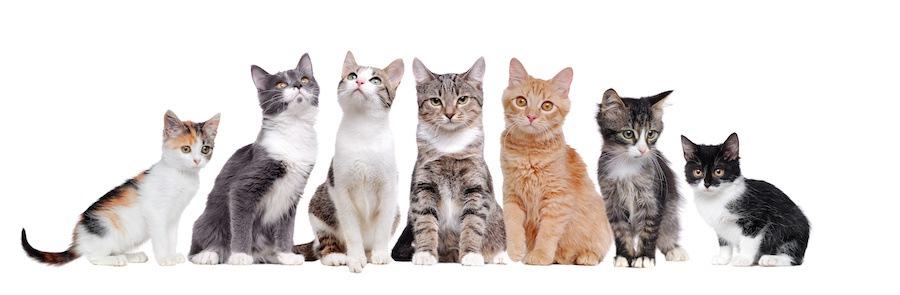 様々な柄の猫たち