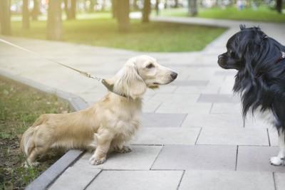 散歩中に出会って挨拶する2匹の犬