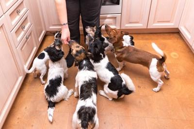 飼い主に群がるたくさんの犬