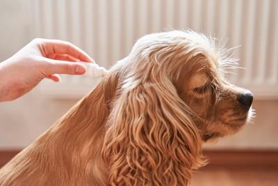 虫よけ薬をつけられている犬