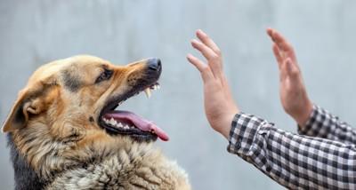 威嚇する犬をガードする手
