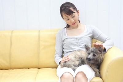 飼い主の膝の上に乗って撫でられている犬