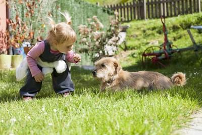 犬に近づく女の子