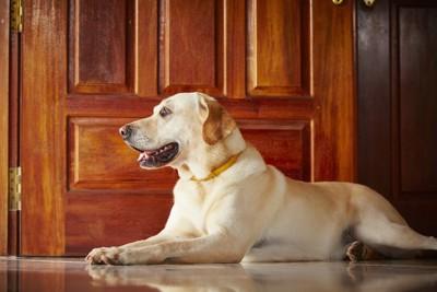 大人しく座っている犬