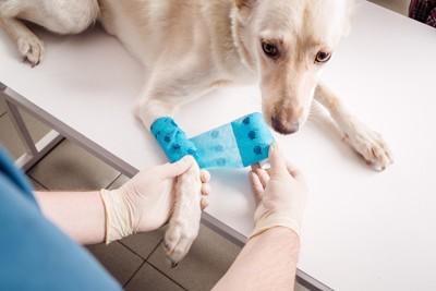 診察台の上で手当を受ける犬