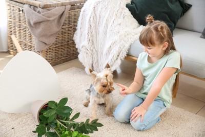 犬のイタズラを注意する女の子
