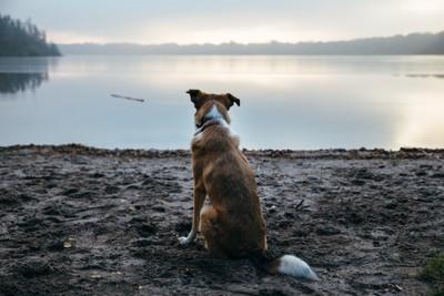 川辺で悲しげな犬の後ろ姿