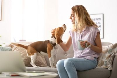 コップを持つ女性と近寄る犬