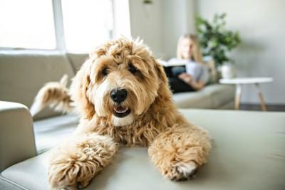 飼い主を背景にこちらを向いて伏せている犬