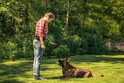 飼い主の指示を待つトレーニング中の犬