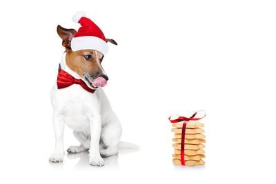 オヤツを見る赤い帽子をかぶった犬