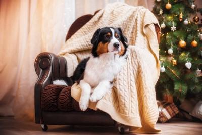 椅子でくつろぐ犬