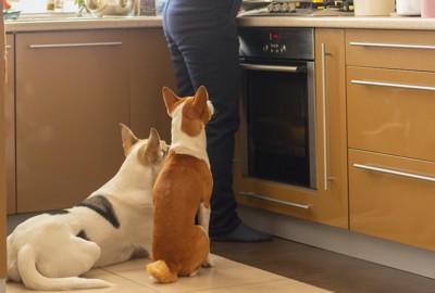 料理中の人の後ろで待つ犬たち