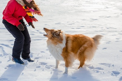 犬から吠えられる女性