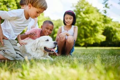 草原で犬を囲む子供たち