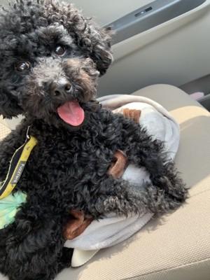 車の移動中の愛犬