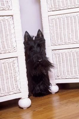 棚の間に隠れる犬